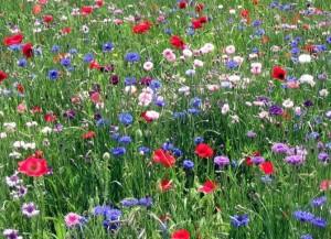 Blomstertur på Stejlebanke