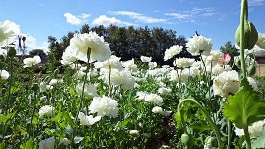 Bliv blomsterbinder for en dag