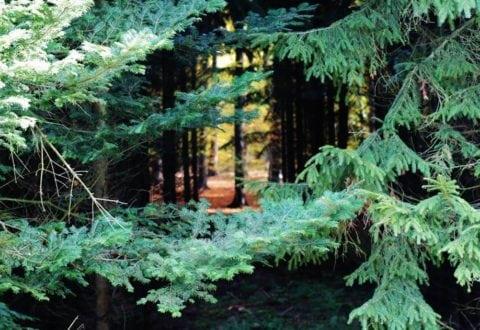 Lad dine børn fare vild i skoven
