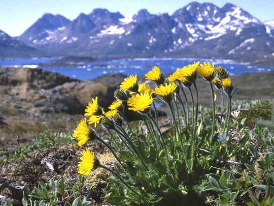 Grønlands flora fra nord til syd
