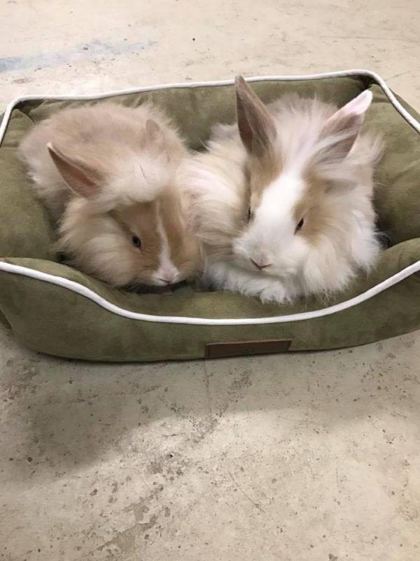 Skønne kaninunger