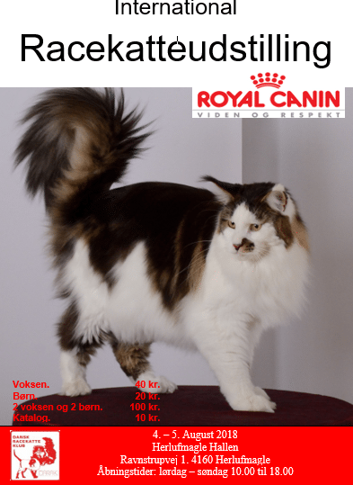 International Katte Show