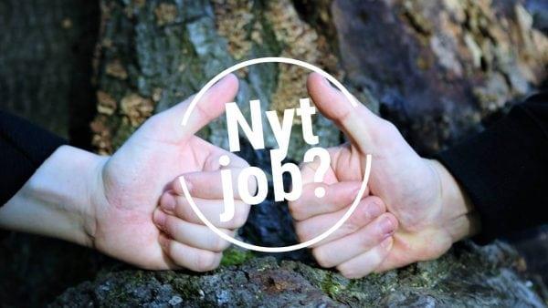 Rengøringsmedarbejder og vikar søges til Næstved Gymnasium og HF