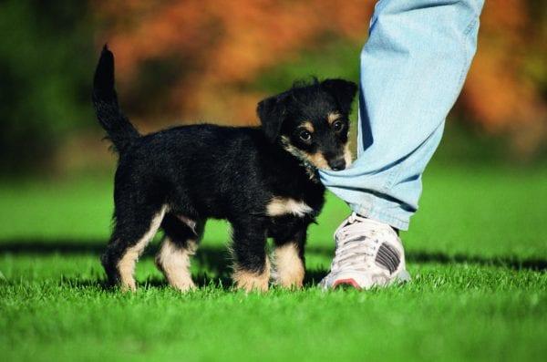 Få dit kæledyr passet hos en lokal dyreven